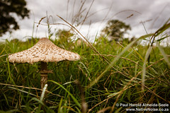Wild Mushroom In The English Countryside