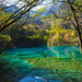 Spring in Five Flower Lake, Jiuzhaigou Valley