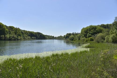 L'étang du Gris Moulin dans la réserve naturelle de Nysdanm