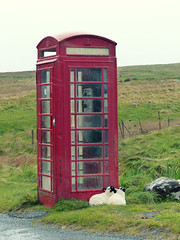 shelter (Chantal van der Ende-Appel) Tags: skye scotland sheep redphonebox