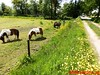 """2015-05-30          57e Veluwe        Wandeltocht        18 Km  (45) • <a style=""""font-size:0.8em;"""" href=""""http://www.flickr.com/photos/118469228@N03/18296630175/"""" target=""""_blank"""">View on Flickr</a>"""