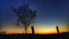 the eternal battle (Rodrigo Alceu Dispor) Tags: sunset sky tree battle eternal
