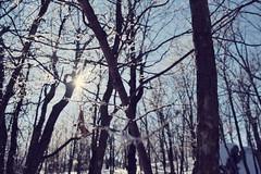 Frozen heart (jolmondor) Tags: trees winter cold nature frozen sainthilaire