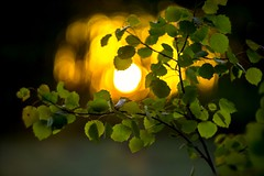 Sunset in forestpark (bestdelnik) Tags: sunset sun leaves forest spring sunsetlight forestpark spring2016
