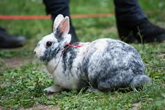 DSC_0023 (divi333) Tags: rabbit bunny bunnies ferrara rabbits conigli coniglio 2016 conigliando