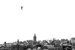 Concrete Dantela (asliakal) Tags: bosphorus istanbul galata tower blackandwhite bw black white concrete buildings historical canon bird seagull turkiye turkey travel blackwhite