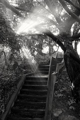 Don't Wake Me I'm Not Dreaming (Rommel Parada) Tags: morning trees light blackandwhite sunlight newyork monochrome stairs sunrise still peaceful longisland stairway foliage silence grayscale sunrays shining tranquil nassaucounty roslynny gerrypark