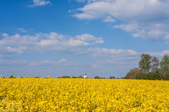 Rapsfeld mit Wasserturm (dixde) Tags: sky color colors yellow landscape gelb 1785mm raps wasserturm rapsfeld polfilter wannweil canoneos40d kirchentelinsfurt