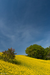 yellow plateau (Sky-Genta) Tags: