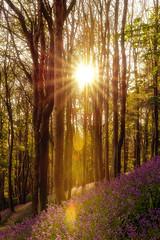 Margam 10 acre wood's bluebells (technodean2000) Tags: park wood trees sun bluebells wales forest port landscape nikon outdoor 10 south flare serene blueberries talbot acre margam d610