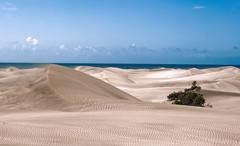 Dust in the wind... (Leo ) Tags: grancanaria mar wind viento arena cielo desierto aire dunas islascanarias maspalomas