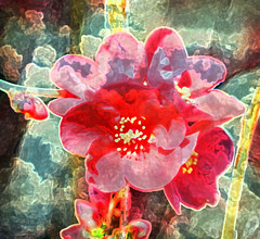 Quince on Brook Street (JangoFeldman) Tags: plant painterly flower photoshop artistic quince layered artisticflowers picmonkey