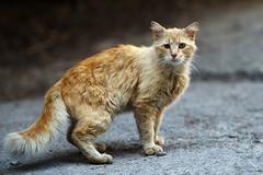 Street cat 137 (Yalitas) Tags: pet cats cat canon kat feline chat kitty gato felino katze katzen kot kedi kass gatta streetcat kotka  kocka  katte  katzchen kottur