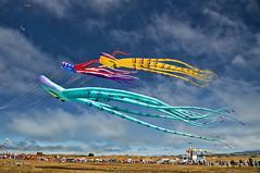 Flying Squid (msuner48) Tags: d600 acr5 cs4 topazlabs sky kites people festival berkeleykitefestival berkeleyca nikonafs24120mmf4
