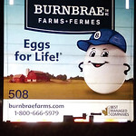 Night Time Safety:  Burnbrae Farms Ltd.