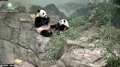 2016_07-20n (gkoo19681) Tags: nationalzoo stealing meixiang beibei yummyapple ccncby