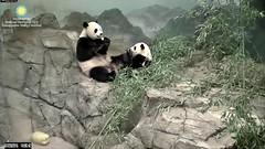 2016_07-20n (gkoo19681) Tags: nationalzoo stealing meixiang beibei yummyapple ccncby