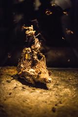 The Fairy Horde And The Hedgehog Host by Tessa Farmer (Kate Farquharson) Tags: museumofoldandnewart mona tasmania canon5dmarkiii hedgehog thefairyhordeandthehedgehoghost tessafarmer taxidermy contemporaryart animals