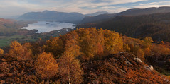 Morning View From King's How (Paul Newcombe) Tags: lakedistrict lakes autumn england derwentwater kingshow keswick morning sunrise uk 2015 october sidelight trees golden silverbirch fells mountains skiddaw