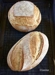 French Mixed-Grain Bread (Levine1957) Tags: brood bread bakken