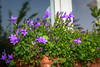 Flowers in the garden (Leonardo Piccioni) Tags: flowers nature colors spring nikon d7100 nikkor1685vr nikonclubit nikonsb700