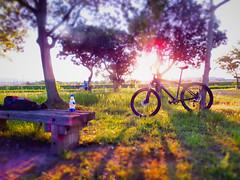 Fun In The Sun @ Heijo Palace, Nara, Japan. (kinkicycle.com) Tags: bicycle japan japanese cycling fuji bikes bicycles cycle mtb nara custom irc shimano deore heijo lovenara