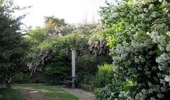 (Cristina Birri) Tags: flowers primavera spring fiori giardino friuli colonna gorizia panchina viale viatori giardinoviatori