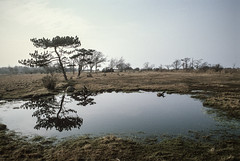 the pond and the tree (Lars L. Iversen) Tags: