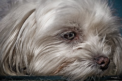 Nina (Gelert, el eterno aprendiz) Tags: canon perro reflejo hdr pelo perra platinumheartaward