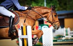 [Chalet--Gobet] Concours 29.05.2015-37 (#vmivelaz) Tags: horse animal sport canon cheval contest lausanne 5d concours lightroom canoneos5dmarkiii vincentmivelaz manegechaletagobet vmivelaz