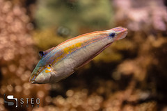 5D__5470 (Steofoto) Tags: genova porto pesci acquario darsena crostacei rettili cetacei molluschi