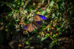 Taiwan-121113-248 (Kelly Cheng) Tags: travel color colour green tourism nature animals horizontal fauna butterfly daylight colorful asia day taiwan vivid nobody nopeople colourful traveldestinations  northeastasia