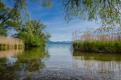 sunny day at Chiemsee (hjuengst) Tags: lake alps reed water germany bayern bavaria see wasser sunny alpen sonnig chiemsee schilf rosenheim chieming stttham