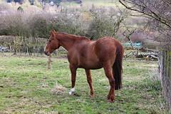 Calver 048 (Slimboy Fat) Tags: derwentvalley calver derbyshire england uk