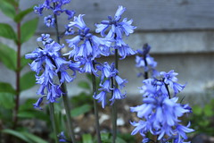 DSC_1136 (PeaTJay) Tags: flowers plants macro nature gardens fauna outdoors reading flora sigma micro closeups berkshire lowerearley nikond750