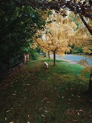 Rainy day in the Mountains (Markus Jaaske) Tags: autumn trees dog fall leaves australia bluemountains leura nokia808pureview