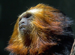 National Zoo  (1305) (smata2) Tags: zoo nationscapital smithsoniannationalzoo itsazoooutthere zoosofnorthamerica
