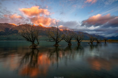 Glenorchy Willow Trees (shaunyoung365) Tags: trees mountain lake mountains sunrise sony newzealnd a7rii