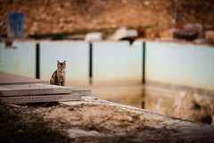 Bad Boy (mugensx) Tags: sony alpha dslr a900 zeiss carl 135mm f18 bokeh dof focus cat
