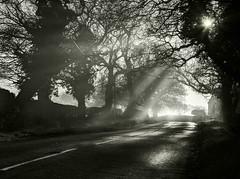 Shafts Of Light.. (Philip R Jones) Tags: shaft lightsshaft showtheway hope bw road way light morning mono blackandwhite