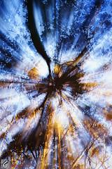 Forest Exposure (Dan @ DG Images) Tags: fractal foliage trees shrubs overhead blur filter modified wallpaper white dark black color colour stare fun dunedin otago nz new zealand forest exposure