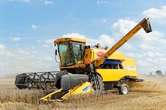 Harvest New Holland TC5050 (krzysztof_los) Tags: harvest new holland tc5050 rolniczy zakad dowiadczalny instytutu uprawy nawoenia gleboznawstwa borusowa iung aniwa malopolska canon 550d efs18135mm f3556 is hdr dxo optic pro 9 eos ess18135mm