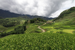 A green paddy field in Sapa, Vietnam (leonardrodriguez) Tags: vietnam asie asia riz risaia risaie green paddy greenpaddy field sapa risire