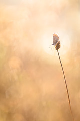 papillon d'une fin d't (YannW) Tags: nature sauvage papillon butterfly azur bokeh lumire canon 6d 100mm