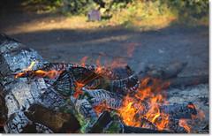 Flames (Bristol RE) Tags: wood log trunk timber char charred ash flame flames heat haze
