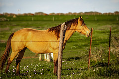 IMG_3276.jpg (Melinda Ledsome) Tags: ranch horses horse southwest nature field sanantonio rural america fence landscape outside countryside spring oak cowboy texas natural folk farm live wildlife country hill scenic pasture hillcountry picturesque springflowers equine texan springtime countrylife medow fenceline texashillcountry countyroads springtimeflowers texasphoto texaslandscapephotography texasnaturephotographer texastravelphotography texasimages texasnaturephotography texaslandscapephotos texaslandscapeimage texaslandscapephotographer texaslandscapepicture texasnatureimage texasnaturephoto texasnatureprints texasnaturestockimage texasnaturestockphoto texasnaturestockphotography texasnaturestockpicture texaspicture texasscenicimage texasscenicphoto texasscenicphotography texasscenicpicture texasscenicprints texasscenicstockimage texasscenicstockphoto texasscenicstockphotography texasscenicstockpicture texastravelimage texastravelphoto texastravelpicture texastravelprints texastravelstockimage texastravelstockphoto texastravelstockphotography texastravelstockpicture