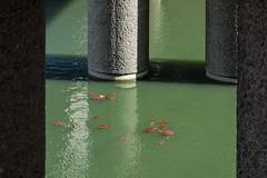 Barbican lake (Spannarama) Tags: uk sunlight lake london water sunshine shadows columns barbican pillars lillypads