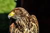 where's my food (sheepphotography017) Tags: bird nature beautiful beauty birds vibrant sassy fair edit