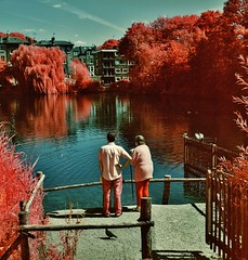 (bill bold II) Tags: london 120 film mediumformat infrared yashicamat124g homedeveloped kodakeir colourinfrared tetenal kodakaerochrome