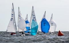 SM i Drake 2014 (Look at the Birdie!) Tags: sailing sails dragons sandhamn archipelago spinnakers drachen swedishchampionship drakar buoyant
